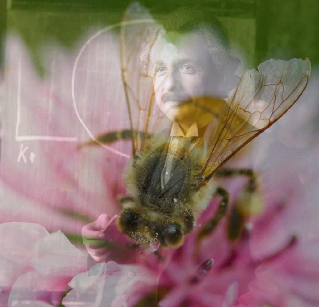 Einstein Und Das Bienensterben
